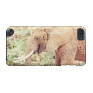 Pink Elephant Photograph iPod Touch 5G Case