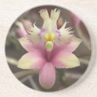 Pink Epidendrum Orchid Coaster