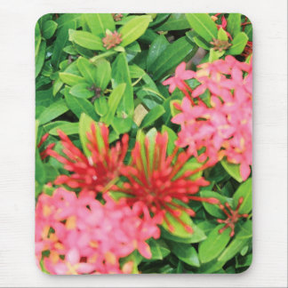 Pink Explosion Mouse Pad