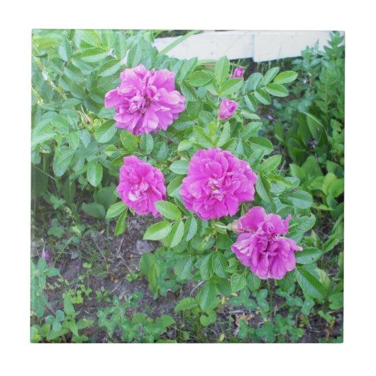Pink Fkowers Tile
