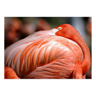 Pink Flamingo - ACEO 9 Pack Of Chubby Business Cards
