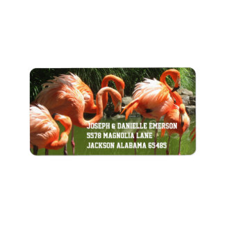 Pink Flamingo Address Labels