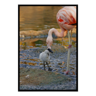 Pink Flamingo and baby chick Poster
