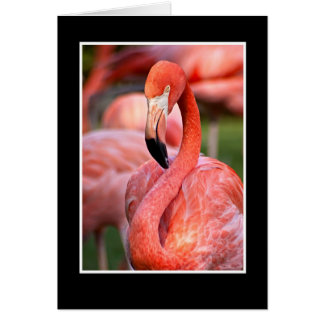 Pink Flamingo Blank Note Card