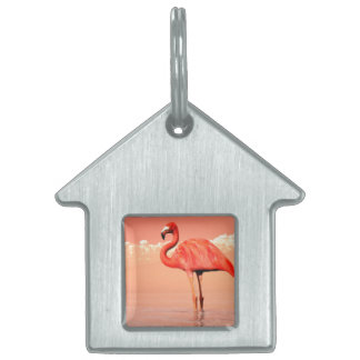 Pink flamingo in the water - 3D render Pet Name Tag