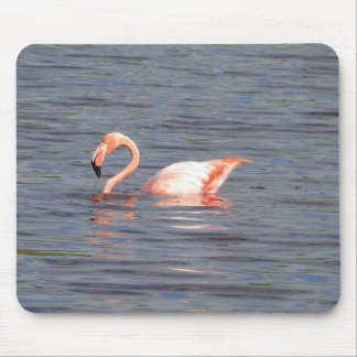 Pink flamingo of the Galapagos Mouse Pad