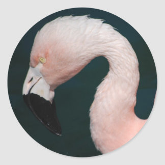 Pink Flamingo Stickers
