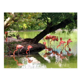 Pink Flamingos 7124 Postcard
