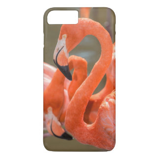 Pink Flamingos at Gatorland iPhone 7 Plus Case