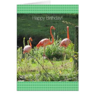 Pink Flamingos Birthday Greetings Card