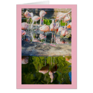 Pink Flamingos Blank Greeting Card