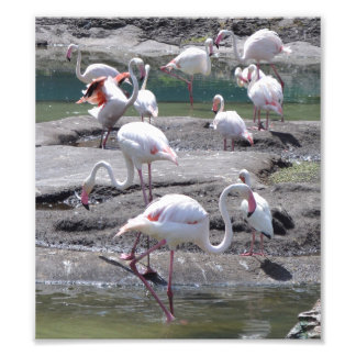 Pink Flamingos Photo Print
