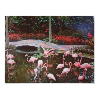 Pink Flamingos Photograph