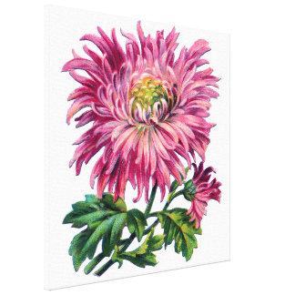Pink floral, pink mum canvas print