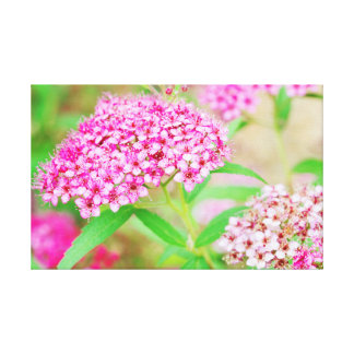 Pink Flower Burst Canvas
