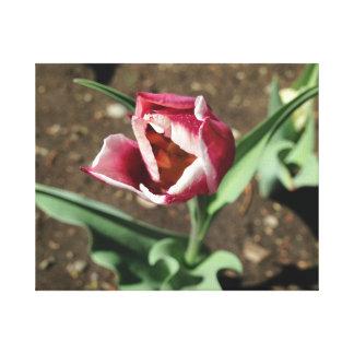 Pink flower canvas