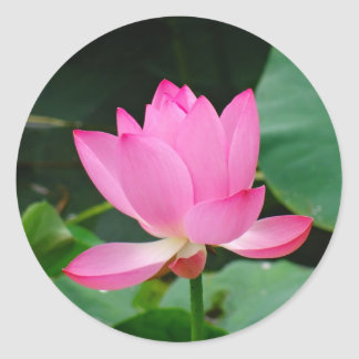 Pink Flower Classic Round Sticker
