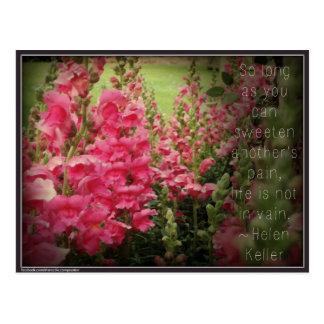 Pink Flower & Helen Keller Kindness Quote Postcard