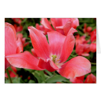 Pink Flower in Tivoli, Denmark Card