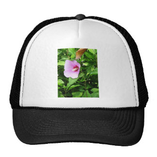PINK Flower Lilly TEMPLATE Reseller Holiday Gifts Hat