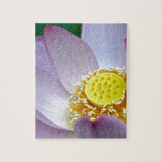 Pink flower of lotus puzzles