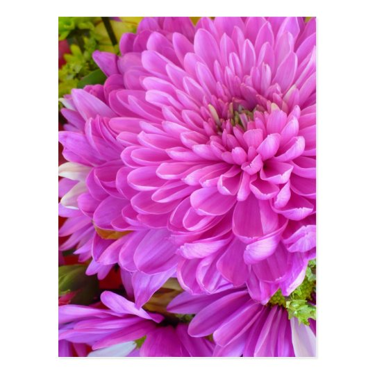 Pink flower Power Postcard
