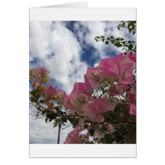pink flowers against a blue sky card