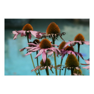 Pink Flowers by the Water Poster