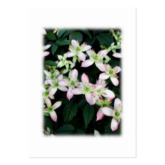 Pink flowers. Clematis. On White. Business Card Templates