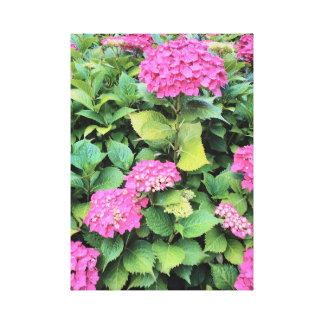 Pink Flowers Hydrangea  Single Print