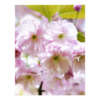 Pink flowers on Japanese cherry tree in city garde Letterhead
