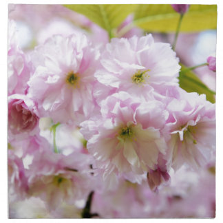 Pink flowers on Japanese cherry tree in city garde Napkin