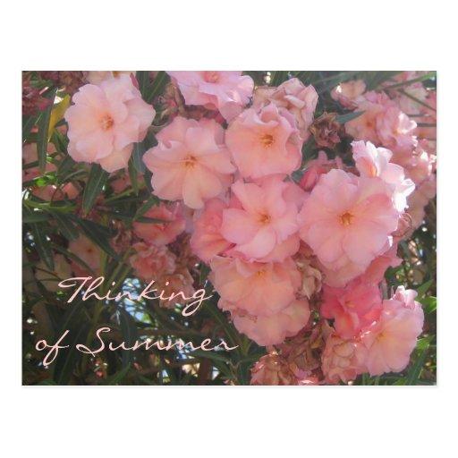 Pink Flowers Postcard