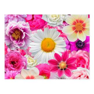 Pink flowers_ Sanchez Glory Postcard