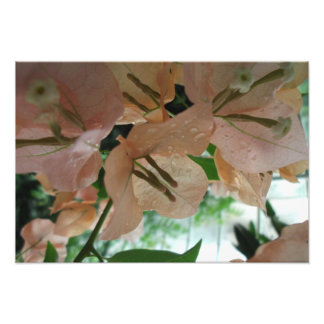 Pink Flowers Up Close Photo Art