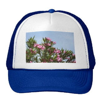 Pink flowers with a blue sky hats