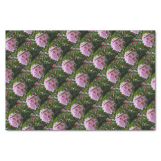 pink flowers with dew tissue paper