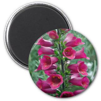 Pink foxglove flowers 2 inch round magnet