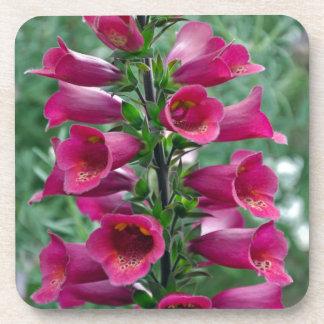 Pink foxglove flowers coasters