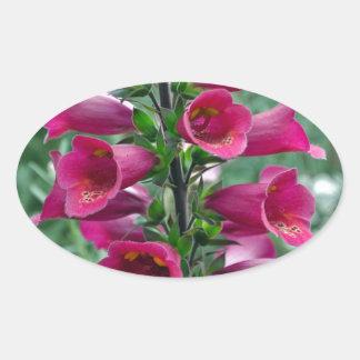 Pink foxglove flowers oval sticker