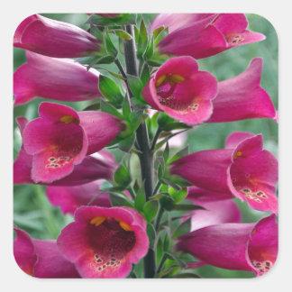 Pink foxglove flowers square sticker