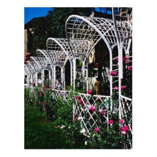 Pink Franciscan Gardens flowers Postcard