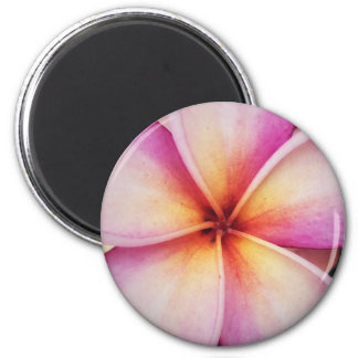 Pink Frangipane Flower Round Magnet
