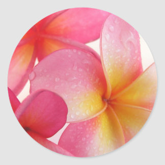 Pink Frangipani Classic Round Sticker