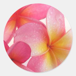 Pink Frangipani Round Sticker