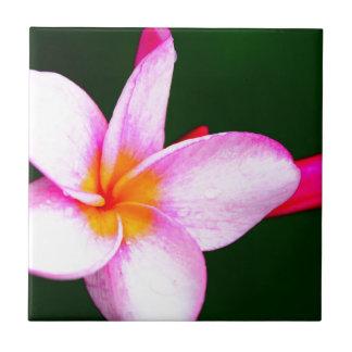 Pink Frangipani Tiles