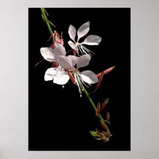 Pink Gaura Flower Poster