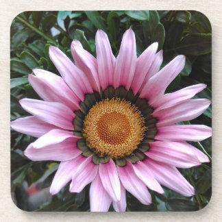 Pink Gazania Flower Coaster