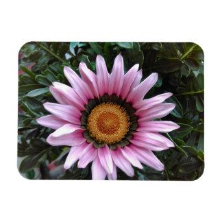 Pink Gazania Magnet