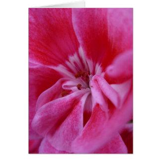 Pink geranium notecard